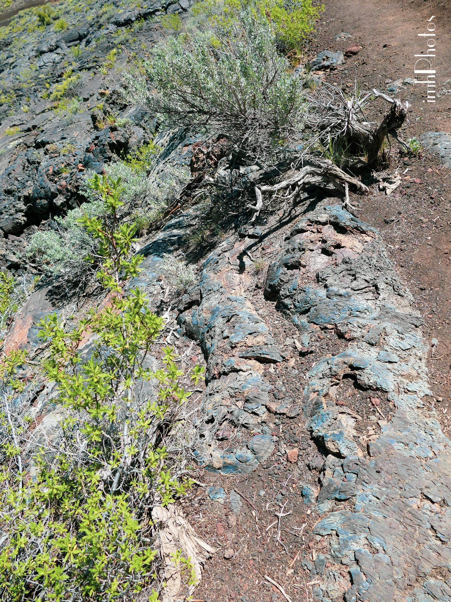 Blue Dragon Pahoehoe lava
